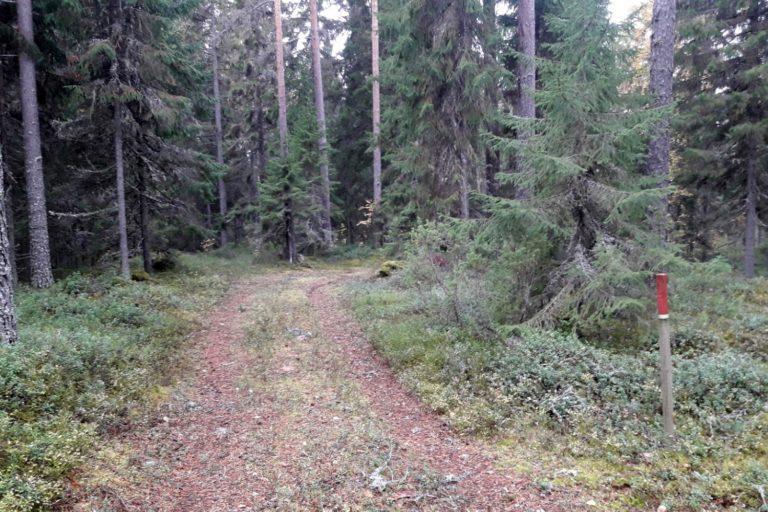 Metsätie, punapäinen puinen opaskeppi tien oikealla puolella.