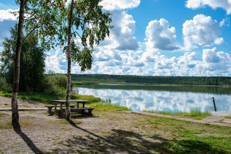 Kodesjärven hiekkainen uimaranta ja rantakoivut.