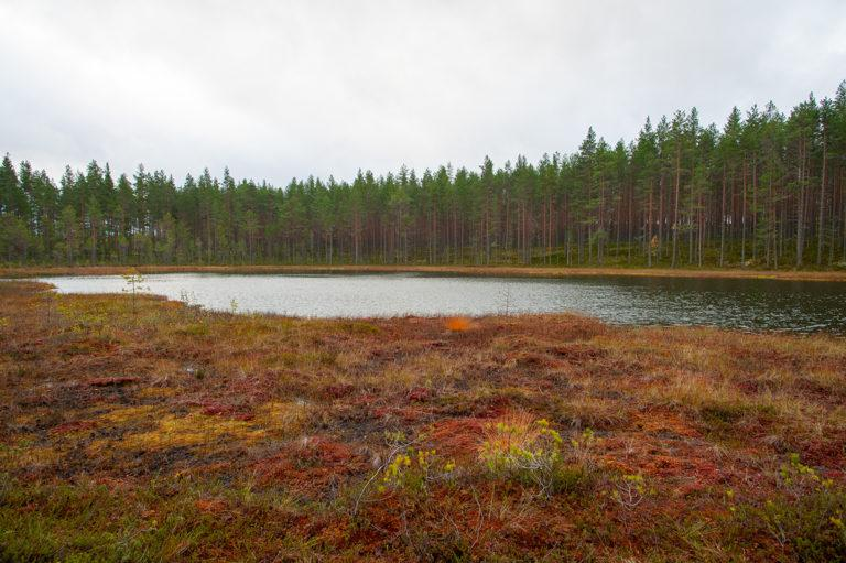 Lapinharjun järvi ja suoreuna sekä taustalla mäntyharju.