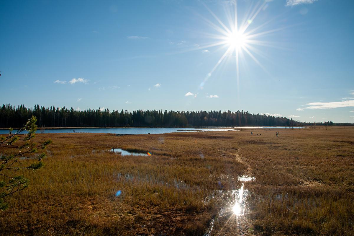 Aurinkoinen syyspäivä Niinistönjärvellä, ihmisiä soisella osalla järveä marjastamassa.