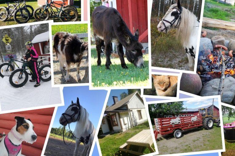 Kuvakollaasi kotieläinpihan eläimistä sekä aktiviteeteistä. Kuvissa mm aasi, kili, poni, kissa, polkupyörät, nuotio ja makkarat.