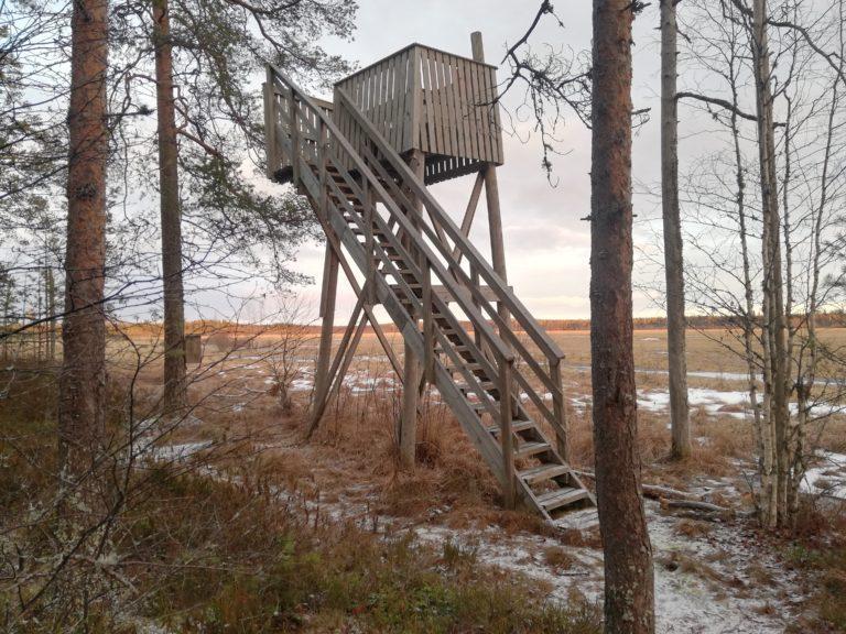 Suksenjärven lintutorni sijaitsee soistuneen Suksenjärven rannalla. Kuvassa puinen lintutorni, soistunut järvi, puita ja linnunpönttö.