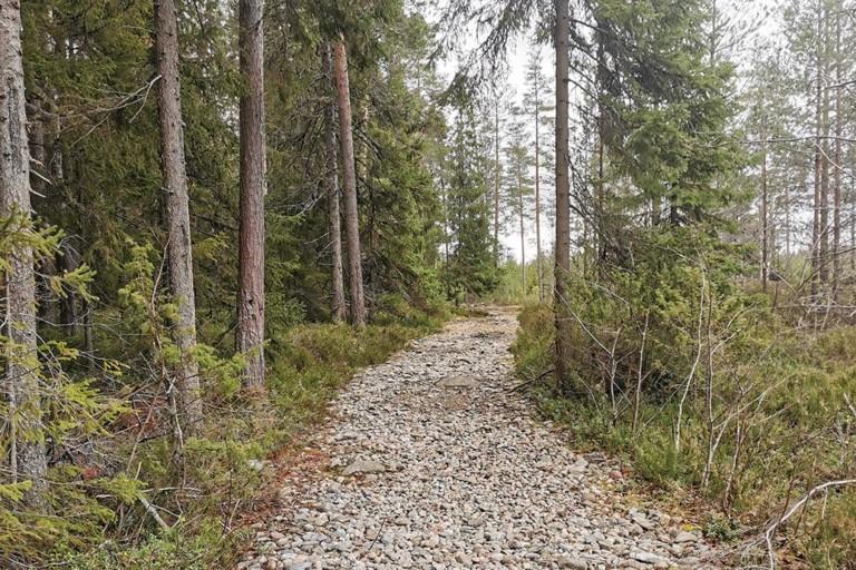 Morajärven laavulle johtaa kivikoinen polku.
