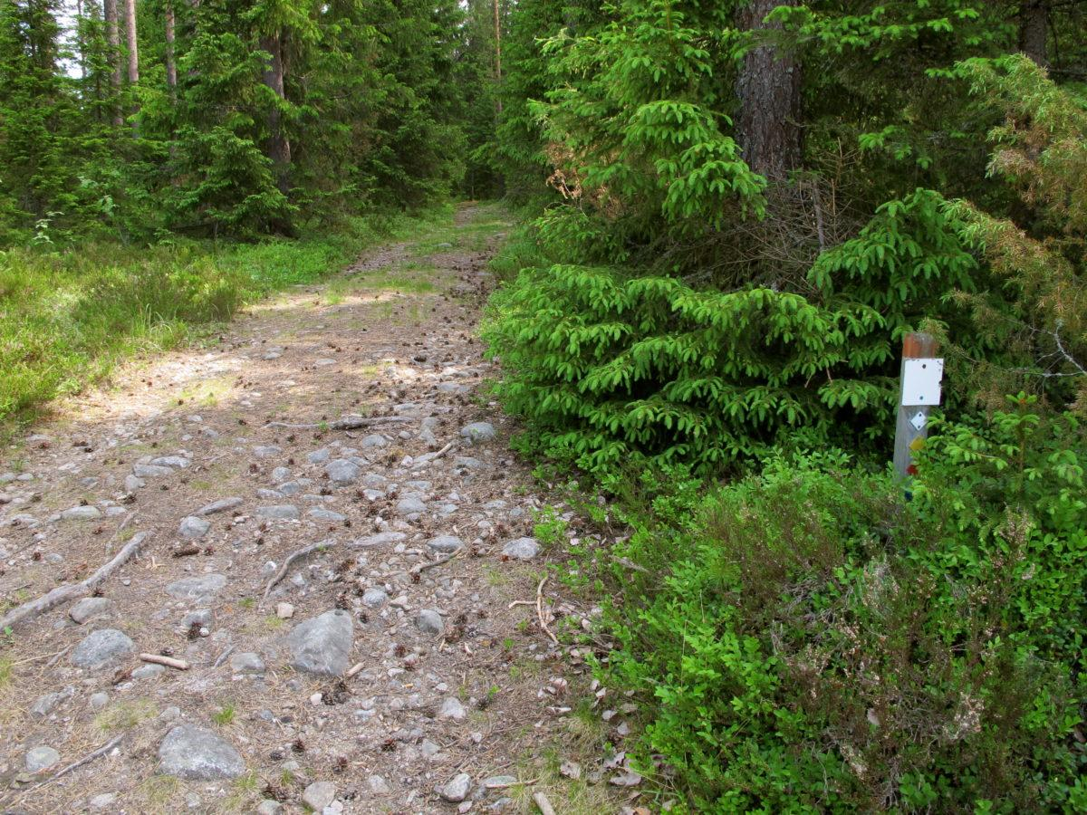 Kivikkoinen polku, opasviitta ja metsä.