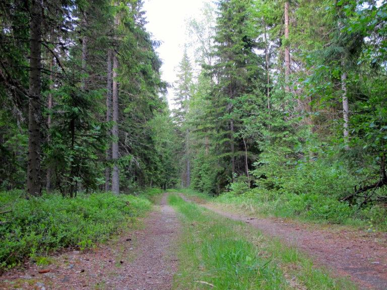 Metsäautotie Kakkorinvuoren maastossa.