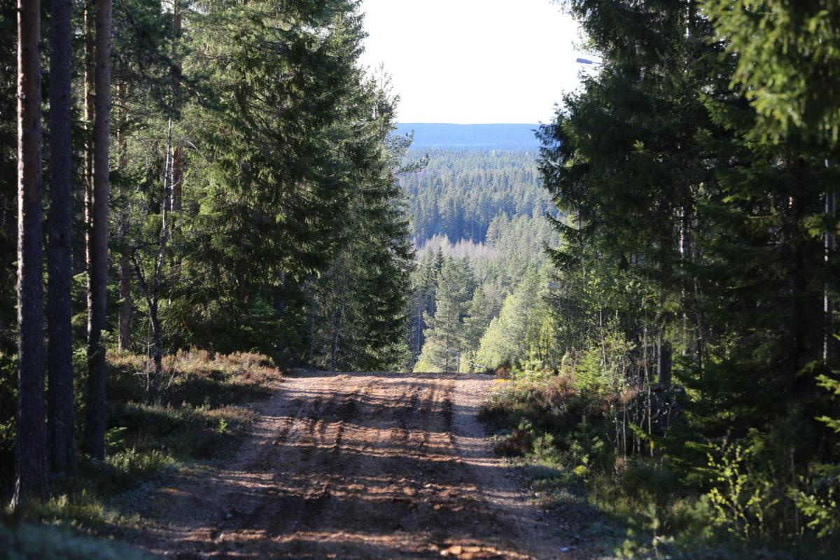 Parran kuntopolulta on paikoin komeat näkymät. Kuvassa polku, kuusia ja radalta puiten välistä upeta näkymät.