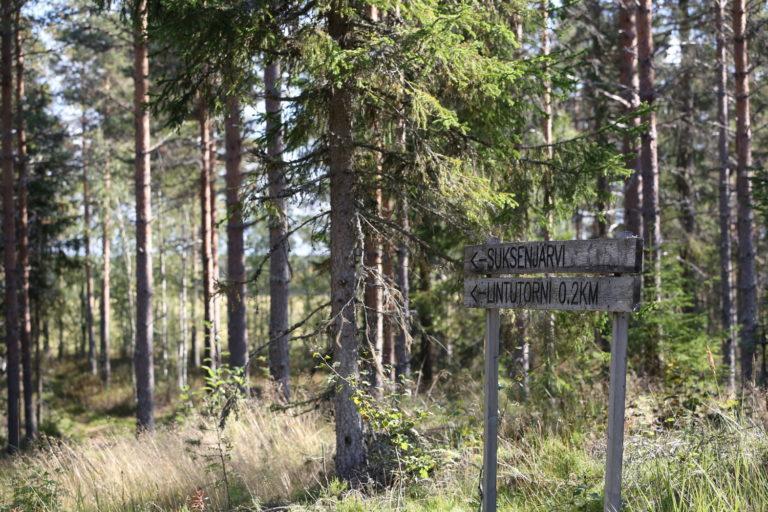 Puinen opaskyltti Suksenjärven reitin varrella, taustalla puita.