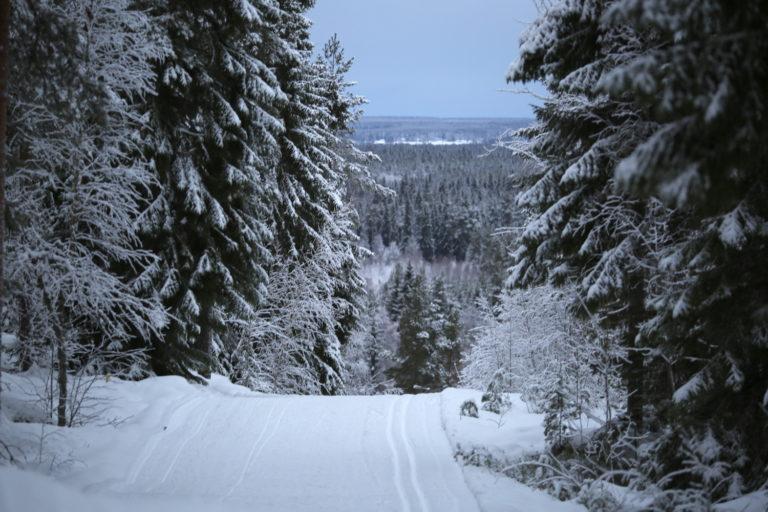 Talvinen näkymä Parran kuntadadalta, kuvassa lumisia kuusia ja hiihtoladut.