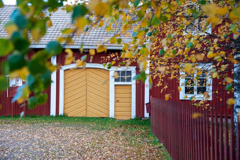 Punainen maalaisrakennus keltaiset ovet, elualalla koivu ja punainen aita.