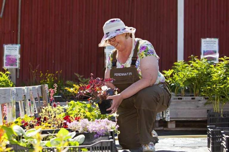 Hattupäinen nainen on polvistunut kasvirivin eteen. Kuva taimimyymälän pihasta.