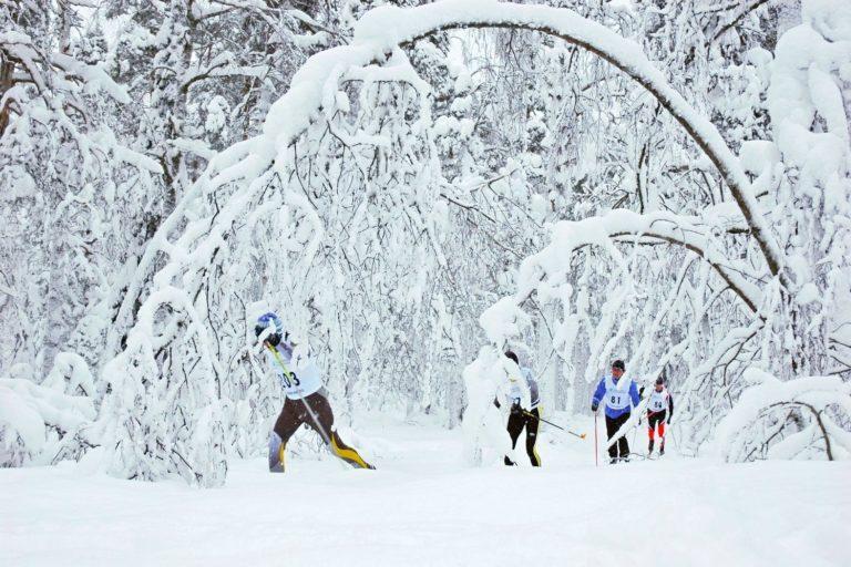 Talvinen metsä, etualalla puu taittunut lumen painosta. Kuvassa neljä kilpahiihtäjää.