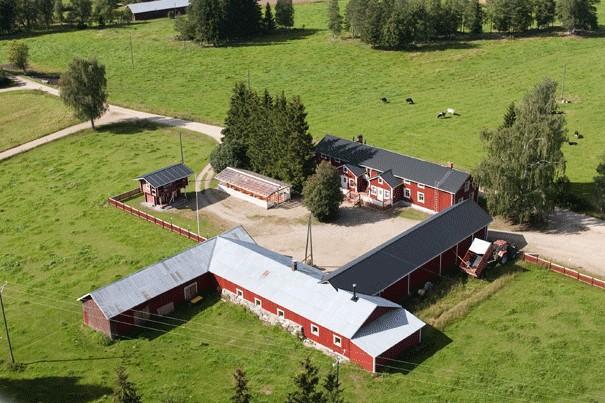 Ilamkuva maatilasta. kuvassa punaisia rakennuksia peltojen keskellä, pellolla on lehmiä.