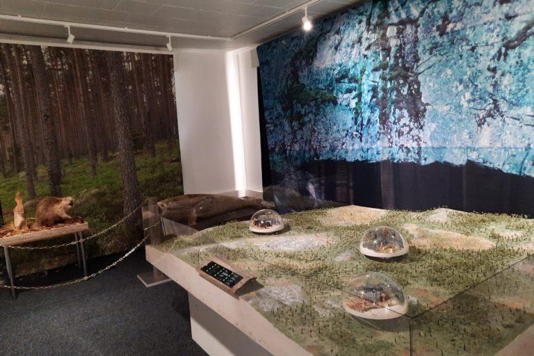 Susiluolan näyttelytila. Pienoismalli alueesta, Kuvakangas luolasta. Täytetty majava ja hylje